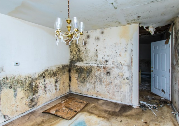 sell a home with mold