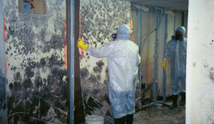 mold remediation appleton wi
