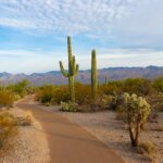 land-buyers-arizona-four-top-tips-to-find-them