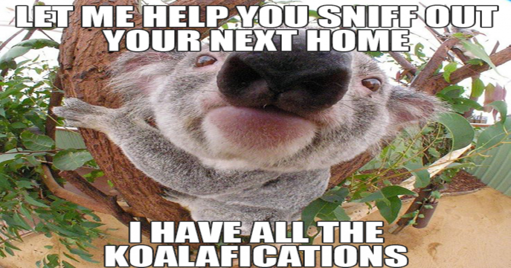 This image has an empty alt attribute; its file name is koalifications_1200X600-1024x538.png