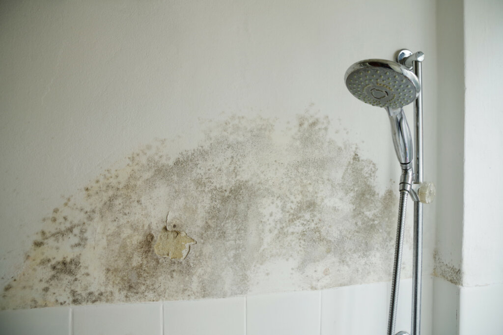 house with mold on wall