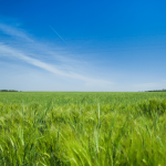 How much is Vacant Land Is Costing You In Simpsonville SC