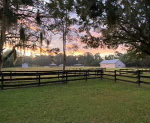 a farm ocala florida that was listed and sold with a flat fee mls listing