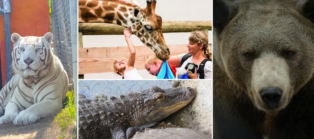 10 things to do in Lillington nc, aloha safari zoo, petting zoo