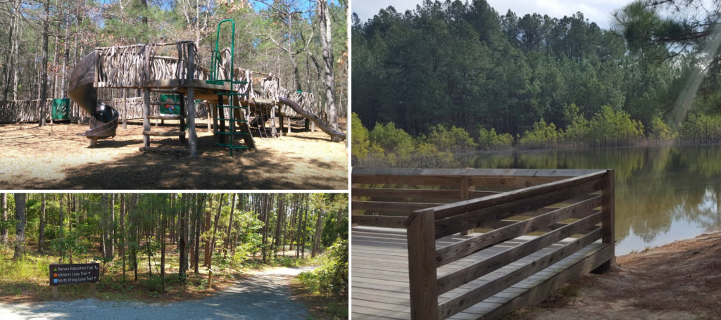 Anderson creek county park, 10 things to do in Lillington nc
