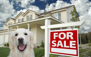 Selling Your House With Pets In Reno Nevada