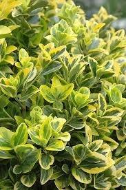 landscape plants for Landlord