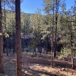 Arizona forest
