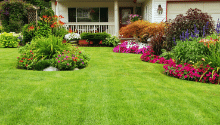 maintain landscape while selling in fort worth