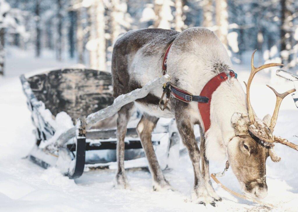 Santa's reindeer Cam