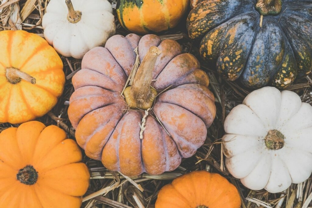 top view of 8 colorful pumpkins