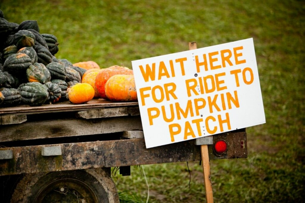Pumpkins on a trailer with a sign that says Wait here for ride to pumpkin patch