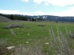 Bare Land In Oregon