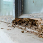 Selling a House with Termite Damage in Idaho