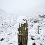 Winter in Tucson