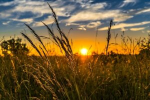 Determining the Value of your Land