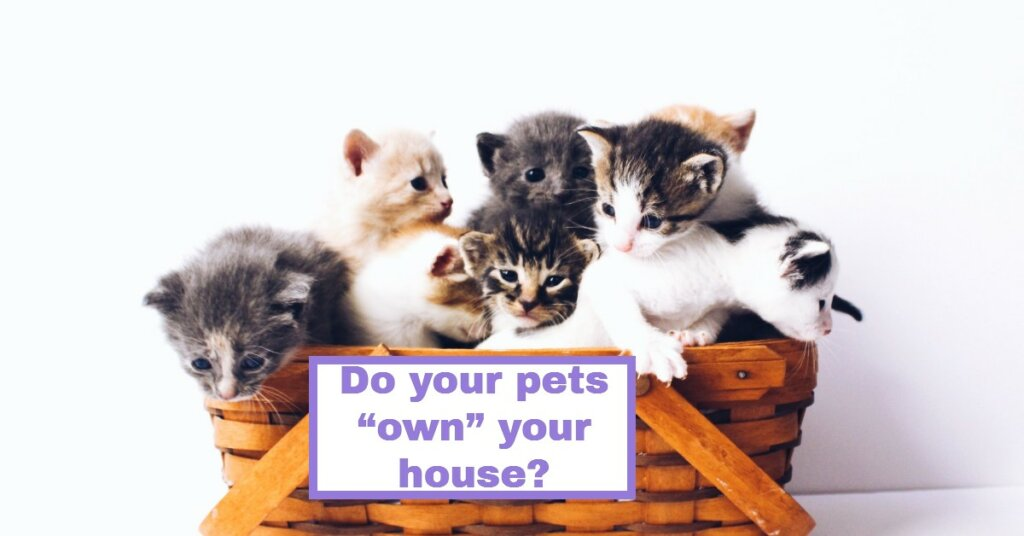 Do your pets own your house?