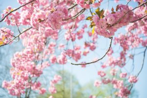 Spring is the best time to sell your Pittsburgh home