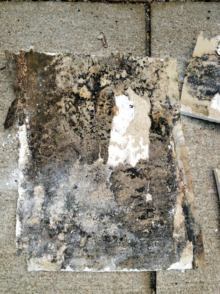 is mold in my house dangerous
