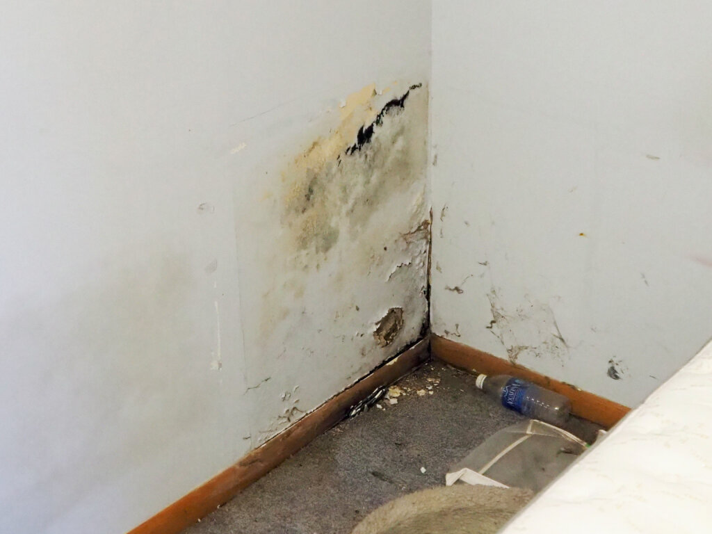Can You sell a house with mold omaha