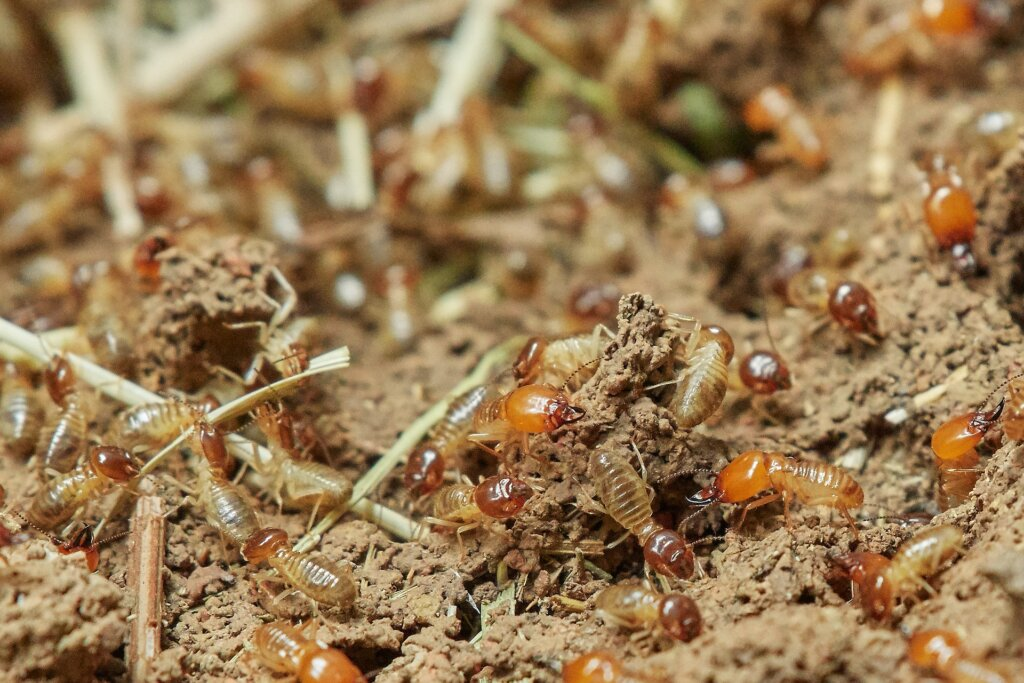 How do i sell my house omaha with termites