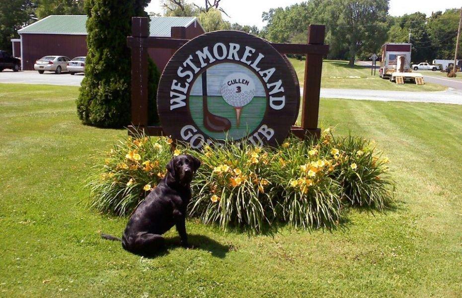 we buy houses westmoreland