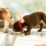 Tips for Selling Your House in Omaha or Council Bluffs When You Have Kids or Pets