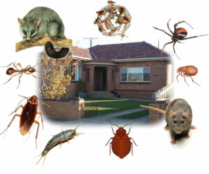 Pests you need to be cleared off