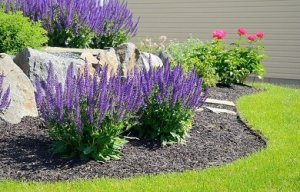 Landscaping in Converse TX