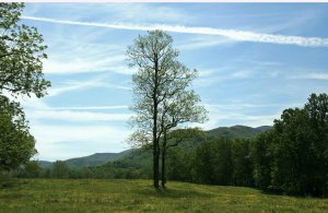 land for sale Sevierville Tennessee
