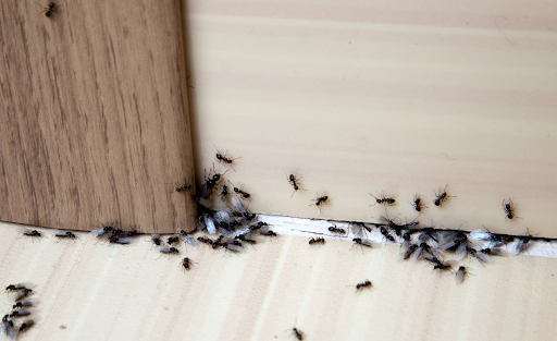 getting rid of pests in charlotte home