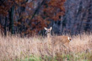 Recreational and hunting land for sale in Northern Virginia