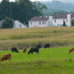 Farm land for sale in Warrenton VA