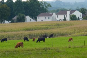 Farm land for sale in Warrenton VA