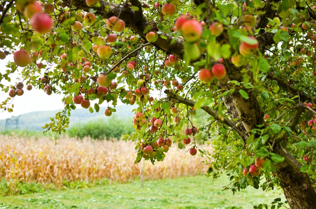 Farm land for sale in Northern Virginia apple orchard