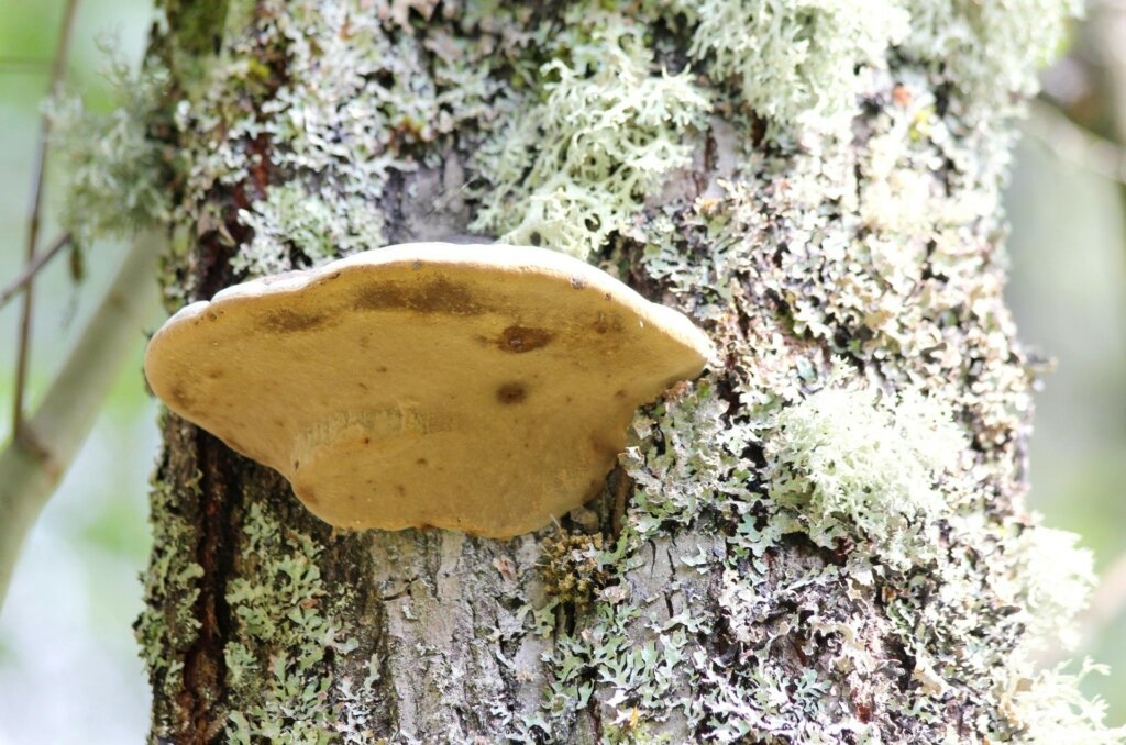Land for sale in Northern Virginia tree fungus