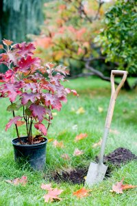 plant trees in fall