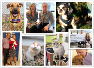 Seattle Animal Shelter Collage