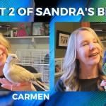 Birds Make Great Pets! Meet Carmen & Farley