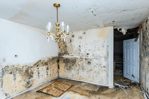 can you sell your home with mold