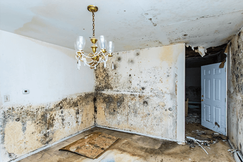 sell house with black mold jacksonville fl