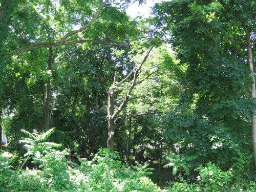 Castillio Lane, Poughkeepsie NY Main 2 www.WeSellNewYorkLand.com