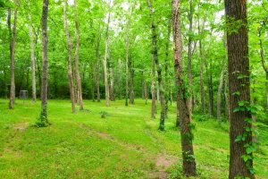 Hunting Land For Lease in Central KY