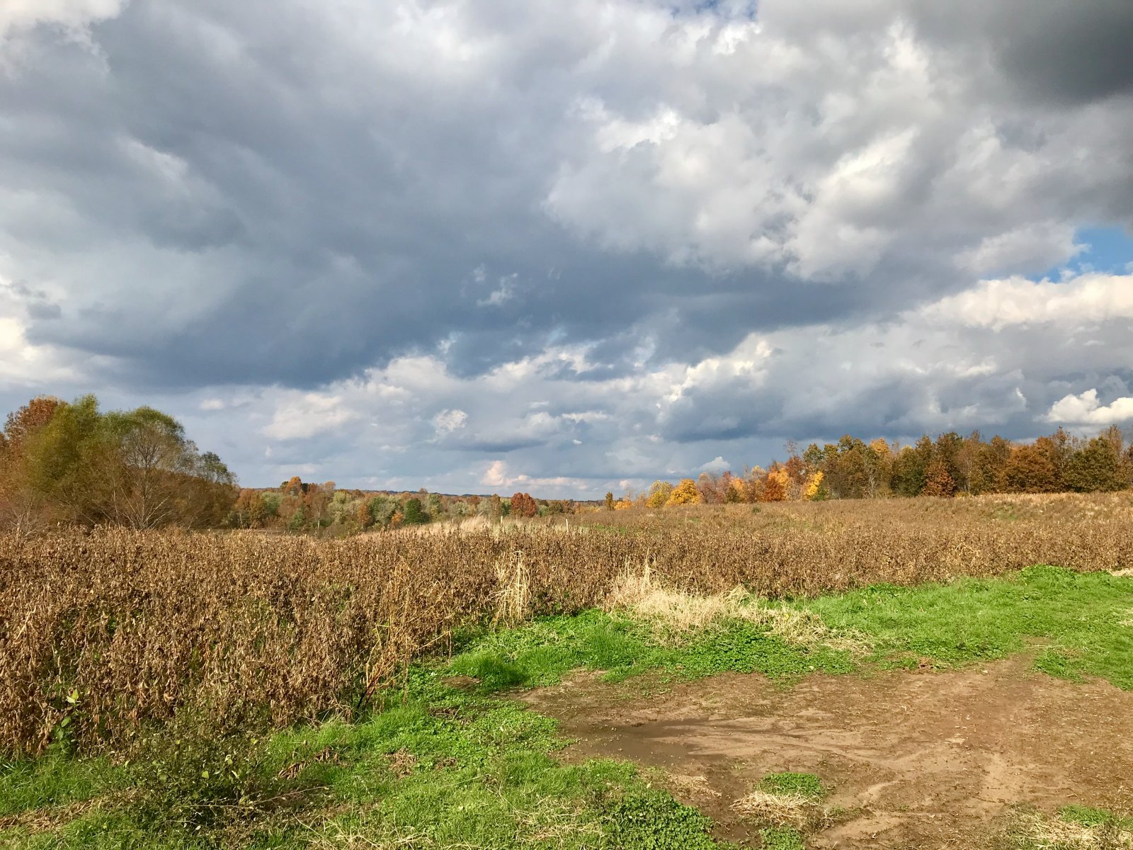 hunting land for sale in central ky