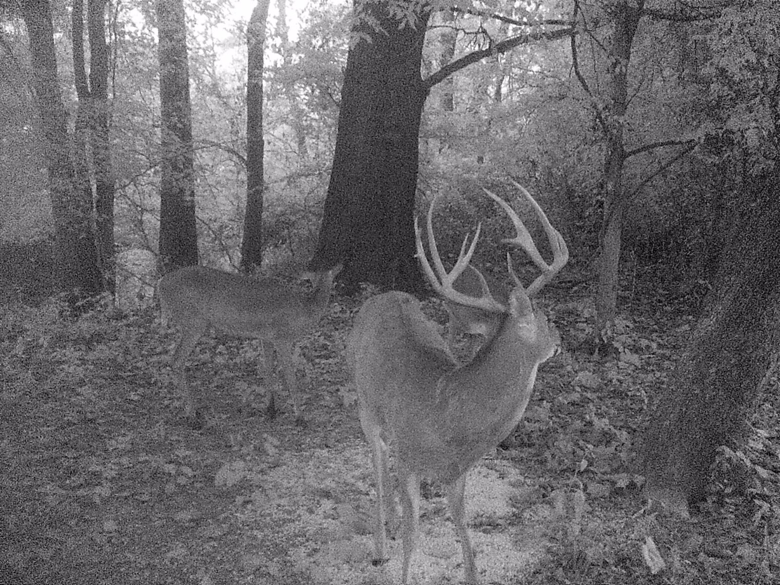 Kentucky Hunting Leases
