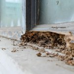 window frame on a house for sale with termite damage
