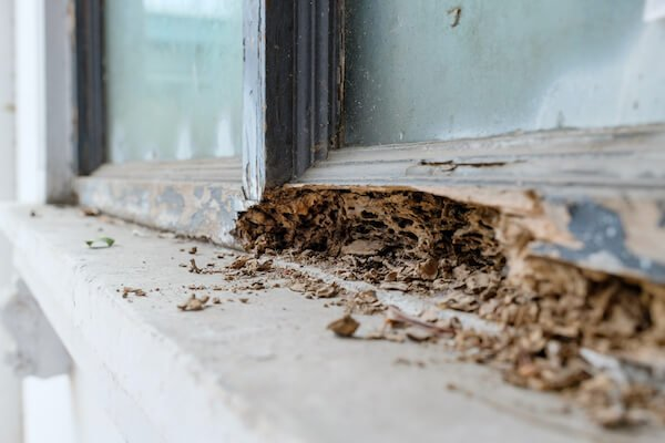a wooden window frame with termite damage