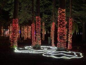 Winter Lights In seatlle washington