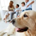 Home Sellers Who Have Pets
