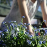 landscape Home Improvements To Make Before Selling This Summer